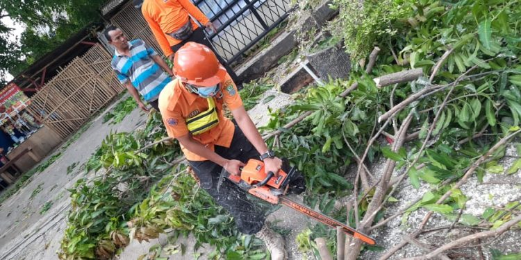 TUMBANG: Petugas BPBD Kabupaten Bekasi tengah membereskan pohon yang tumbang dengan mesin potong akibat hujan angin yang mengguyur Kecamatan Sukatani. FOTO: URC BPBD KABUPATEN BEKASI